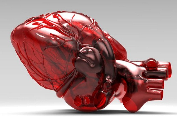 3D Heart Innovation In Disease Diagnosis